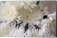 Blooming White Fine Art Print