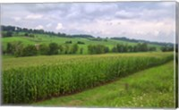 Boone's Cornfield Fine Art Print