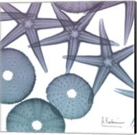 Lavender Dipped Starfish 2 Fine Art Print
