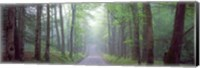 Through the Forest Fine Art Print