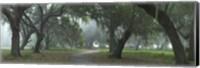 Morning's Mist Fine Art Print
