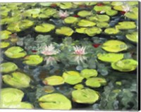 Lilly Pond Fine Art Print