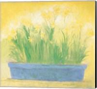 Window Box with Narcissi Fine Art Print