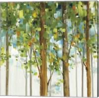 Forest Study IX Fine Art Print
