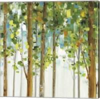 Forest Study VIII Fine Art Print