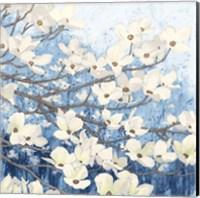 Dogwood Blossoms II Indigo Fine Art Print