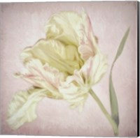 Pink Parrot Tulip Painting I Fine Art Print