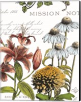 Botanical Postcard Color II Fine Art Print
