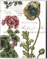 Botanical Postcard Color III Fine Art Print