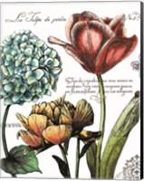Botanical Postcard Color IV Fine Art Print