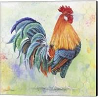 Watercolor Rooster - B Fine Art Print