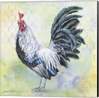 Watercolor Rooster - C Fine Art Print