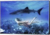 Swim with Tiger Shark Fine Art Print