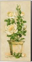 Shades of Rose II Fine Art Print