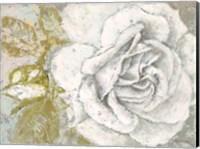 White Rose Blossom Fine Art Print