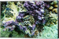 Coral Reef in the Pacific Ocean, Tahiti, French Polynesia Fine Art Print