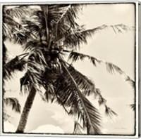 Palm Tree Sepia II Fine Art Print