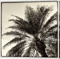 Palm Tree Sepia I Fine Art Print