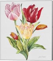 Botanicals 9 Fine Art Print
