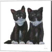 Cutie Kitties IV Fine Art Print