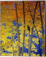 Autumn Aspen Raven Fine Art Print