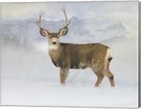 Bucky Deer Snow Fine Art Print