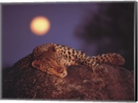 Leopard with Rising Moon Fine Art Print