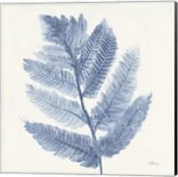 Forest Ferns I Blue Fine Art Print