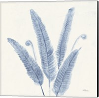 Forest Ferns II v2 Blue Fine Art Print