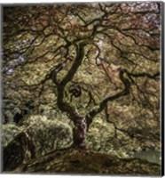 Maple Tree 2 Fine Art Print