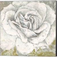 White Rose Blossom Square Fine Art Print