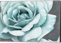 Rose Bloom Fine Art Print