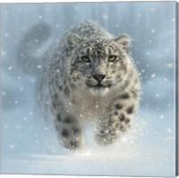 Snow Leopard - Snow Ghost Fine Art Print