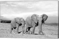 Elephant Mother Fine Art Print