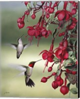 Fuchsia Friends Fine Art Print