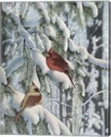 Winter Visitors Fine Art Print