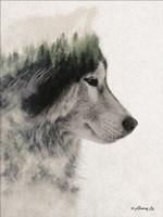 Wolf Stare Fine Art Print
