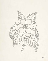 Gardenia Line Drawing Fine Art Print