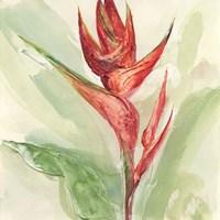 Exotic Flower IV Fine Art Print