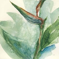 Exotic Flower III Fine Art Print