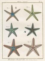 Histoire Naturelle Starfish I Fine Art Print