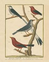 Bird Drawing III Fine Art Print