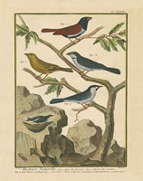 Bird Drawing IV Fine Art Print