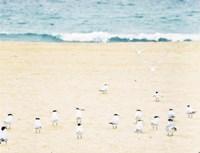 Relaxed Seagulls Fine Art Print