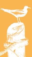 Perching Seabird III Fine Art Print