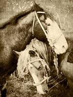 Vintage Horses Fine Art Print