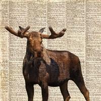 Country Moose I Fine Art Print