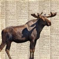 Country Moose II Fine Art Print