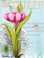 Elegant Tulip I Fine Art Print