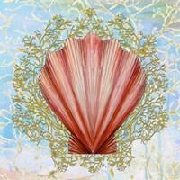 Shell Medley I Fine Art Print